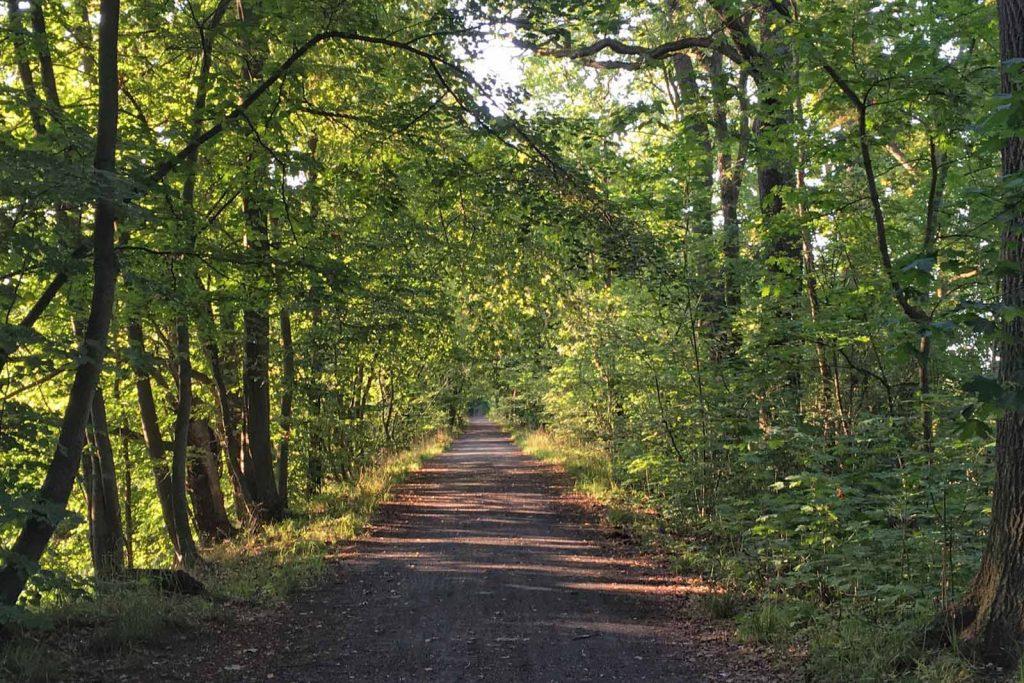 In der Mitte führt ein von grünen Bäumen gesäumter, gerader Weg zum Horizont.