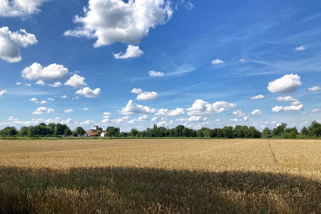Untere Hälfte. Getreidefeld, obere Hälfte blauer Himmel und Schäfchenwolken. Am Horizont ein grüner Streifen, ein Turm ist erkennbar.