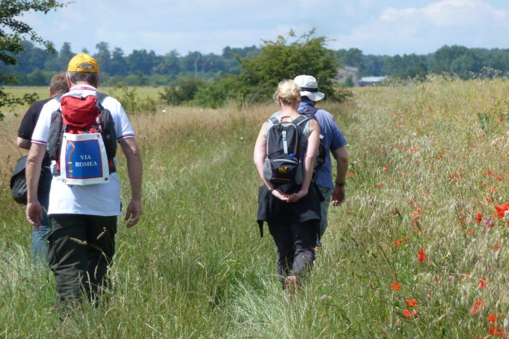 Vier Personen in Wanderausrüstung und mit Rucksack auf dem Rücken gehen durch ein Feld.
