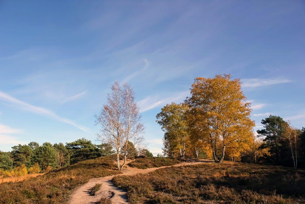 Gelbliche gefärbte Bäume stehen an einem Weg, der sich durch das Bild schlängelt.