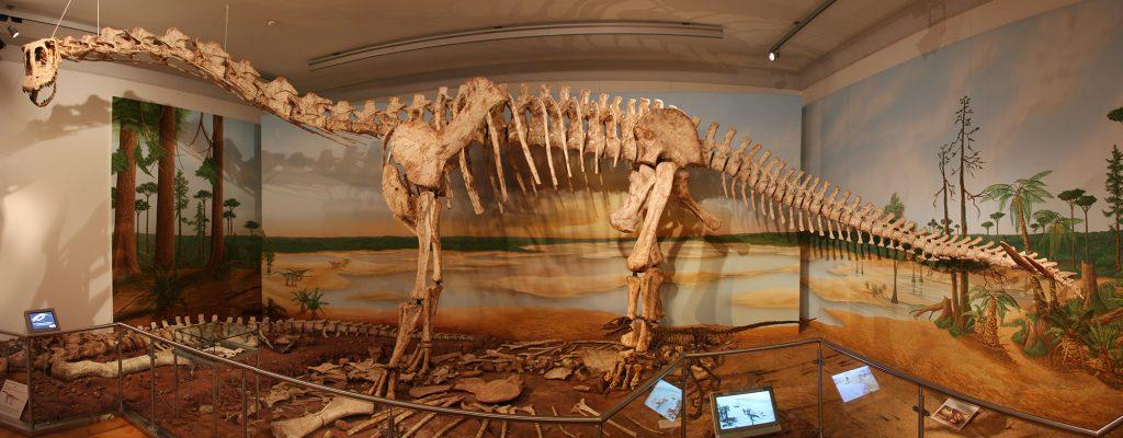 Das Skelett eines Dinosauriers im Dino-Saal des Museums