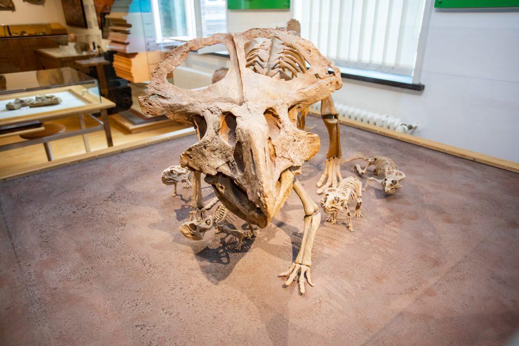 Das Skelett eines Dinosauriers mit Jungtieren.