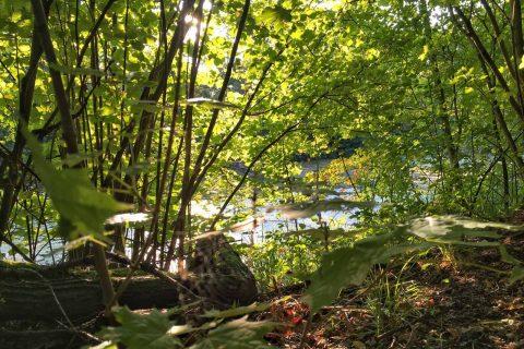 Wald, Frühling, Sonne