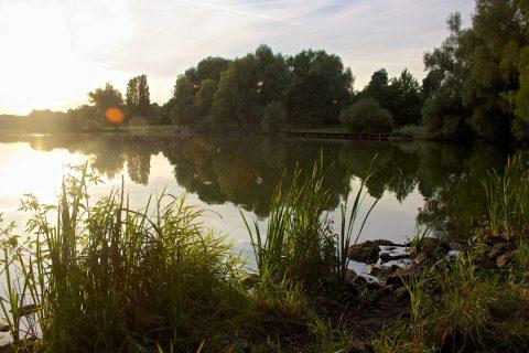 Naturlandschaft um See in Abendstimmung