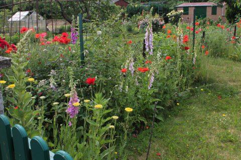 Bunte Blumen in einem Garten