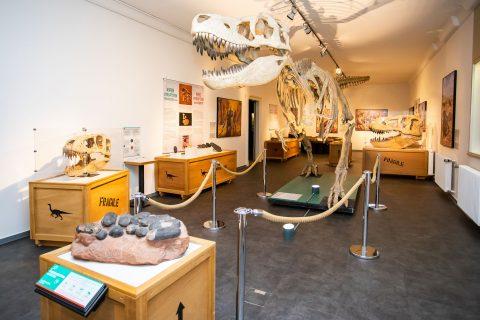 Ein Dinosaurierskelett im Museum